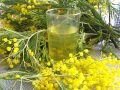 Recette : sirop de mimosa